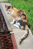 Mirada del gato a continuación. como pequeño tigre Imágenes de archivo libres de regalías