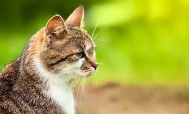 Mirada del gato en hierba Fotografía de archivo libre de regalías