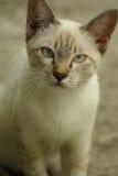 Mirada del gato en usted Fotografía de archivo libre de regalías