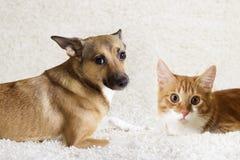 Mirada del gato y del perro imagen de archivo libre de regalías