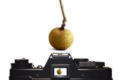 Mirada del Longan a través de la cámara del visor fotografía de archivo libre de regalías