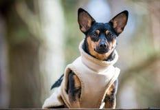 Mirada del perro fotos de archivo