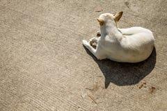 Mirada del perro Fotografía de archivo libre de regalías