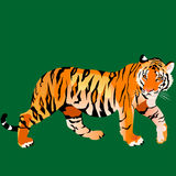 mirada del ` s del tigre Imagen de archivo libre de regalías