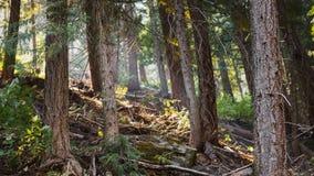 Mirada en el bosque Fotos de archivo libres de regalías
