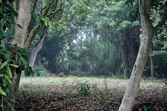 Mirada en el bosque Fotografía de archivo