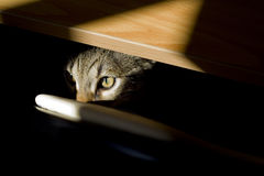 Mirada felina Imagenes de archivo