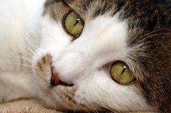 Mirada fija Imagen de archivo libre de regalías