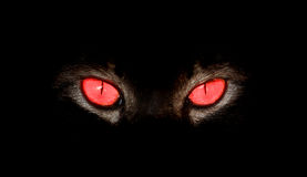 Mirada fija animal de los ojos en algo en negro foto de archivo