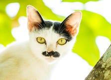 Mirada fija blanca del gato en árbol Foto de archivo libre de regalías