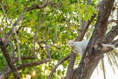 Mirada fija blanca traviesa del gato directamente en duda fotos de archivo libres de regalías