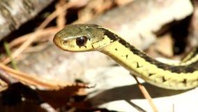 Mirada fija de la serpiente almacen de video