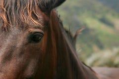 Mirada fija del caballo fotos de archivo
