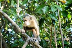 Mirada fija del mono Foto de archivo