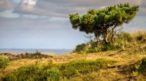 Mirada hacia un árbol y a través del mar de Wadden imágenes de archivo libres de regalías