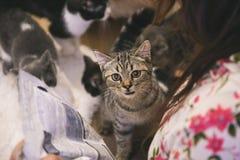 Mirada hambrienta del gatito a la comida Foto de archivo