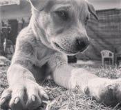 Mirada inocente del perro Imagen de archivo