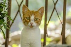 Mirada linda del gatito Fotos de archivo