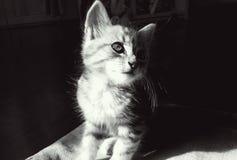 mirada misteriosa del gatito Fotografía de archivo libre de regalías
