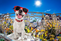 Mirada muda tonta loca del fisheye del perro Fotos de archivo
