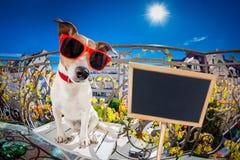 Mirada muda tonta loca del fisheye del perro Fotografía de archivo libre de regalías
