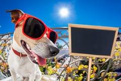 Mirada muda tonta loca del fisheye del perro Imagen de archivo