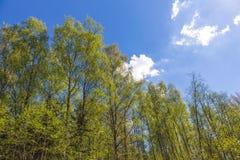 Mirada para arriba al cielo en bosque Imagen de archivo