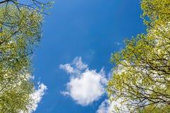Mirada para arriba al cielo en bosque Foto de archivo libre de regalías