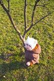 Mirada para arriba de un árbol Fotos de archivo libres de regalías