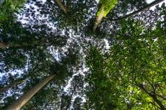 Mirada para arriba en el bosque Foto de archivo