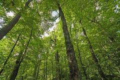 Mirada para arriba en el bosque Imagenes de archivo
