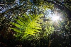Mirada para arriba en el bosque del helecho Fotos de archivo libres de regalías