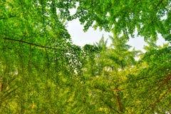 Mirada para arriba en el medio de jardín por completo de árboles en primavera foto de archivo
