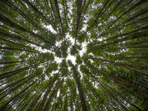 Mirada para arriba en un bosque de árboles imagen de archivo libre de regalías