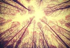 Mirada para arriba a través de árboles deshojados Fotografía de archivo