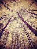 Mirada para arriba a través de árboles deshojados Imagen de archivo