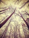 Mirada para arriba a través de árboles deshojados Foto de archivo
