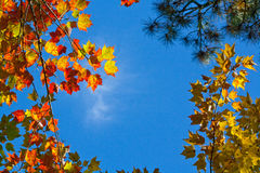 Mirada para arriba a través de las hojas Fotos de archivo libres de regalías