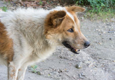 Mirada pobre del perro en algo Imagen de archivo libre de regalías