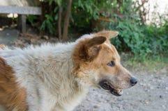 Mirada pobre del perro en algo Imagenes de archivo