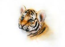 Mirada principal adorable del tigre de bebé para arriba en el fondo blanco Foto de archivo libre de regalías