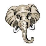 Mirada principal del elefante grande derecho Ilustración del vector en el fondo blanco Fotografía de archivo
