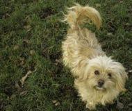 Mirada sincera del perro imágenes de archivo libres de regalías