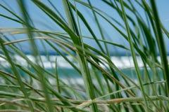 Mirada a través de hierba foto de archivo libre de regalías