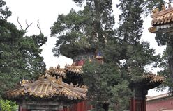 Miradouro do jardim imperial na Cidade Proibida do Pequim imagem de stock
