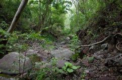 Miraflor naturreserv Royaltyfria Foton