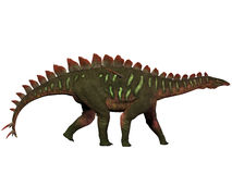 Miragaia Profile. Miragaia is a genus of stegosaurid dinosaur that lived in the Upper Jurassic Era Stock Photography