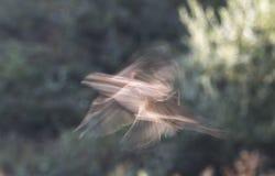 Mirage. Bird in flight on a dim background stock photos