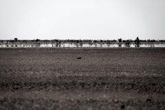 Mirage de désert de Hammada Images libres de droits