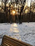 Mirakel av vinterskogen i mitt av staden royaltyfri foto